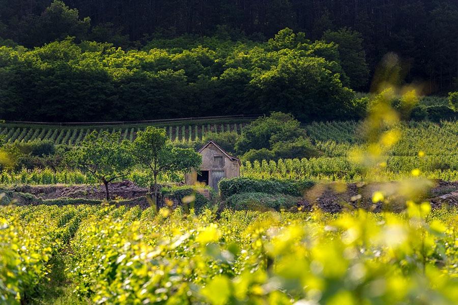 Domaine Cluny à Brochon